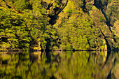 'Plant growth on a rock cliff with a mirror image in upper lake;Glendalough, county wicklow, ireland'