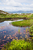 'Lily pads floating in a tranquil pond with a view of dunmanus bay;County cork, ireland'