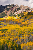 'Autumn coloured aspens and dramatic mountains in ohio pass,Colorado, united states of america'