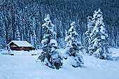 'Snow covered evergreen trees with a snow covered log cabin the in background at dusk;Lake louise alberta canada'