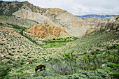 'Horses graze on the bordered grassland along the way to samar;Upper mustang nepal'