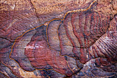 'A colourful sandstone wall eroded in a design;Petra jordan'