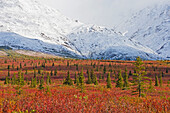 'An autumn landscape off of the denali highway with fresh snow on the mountain range behind it;Alaska united states of america'