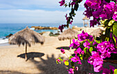 'Hibiscus frame palapas made of grass and bamboo fronds that are typically used for sun protection and shade;Puerto vallarta mexico'