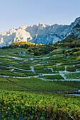'Vineyards;Chamoson Valais Switzerland'