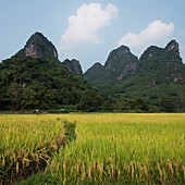 Landscape of rugged mountain peaks and a path through a crop in a field