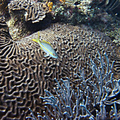 'Marine Life And A Coral Reef; Utila, Bay Islands, Honduras'