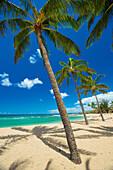 'Palm trees on the beach in Salt Ponds State Park; Kauai, Hawaii, United States of America'