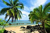 'Palm trees on Anini Beach; Kauai, Hawaii, United States of America'