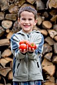 'A young boy holds fresh tomatoes from a greenhouse in front of a wood pile; Palmer, Alaska, United States of America'