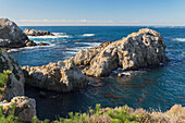 'Harbor seals (Phoca vitulina) swimming in China Cove, Point Lobos State Reserve; Carmel, California, United States of America'