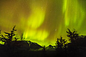 'Northern Lights in the sky above Moose Pass, silhouetted Kenai Mountains and trees in the foreground, Chugach National Forest; Alaska, United States of America'