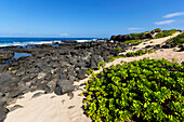 'A remote beach at Kaena Point along the coastline; Oahu, Hawaii, United States of America'