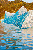 'Iceberg broken off Mendenhall Glacier floating in Mendenhall lake, flipping over and exposing blue polished ice from being underwater; Juneau, Alaska, United States of America'