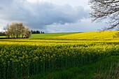 Nature Park Solling-Vogler, Dassel, Lower Saxony, Germany
