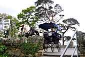 Pferdekutsche an der Mukross Abbey, Ruine am Lough Leane bei Killarney, Irland