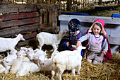 Children at a goat farm in Clare, West coast, Ireland