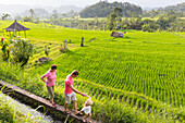 Grandmother, father and son walking in rice field, rice paddy, rice terraces, irrigation channel, evening sun, rice cultivation, boy 3 years old, pavilion, tropical island, family travel in Asia, parental leave, German, European, MR, Sidemen, Bali, Indone