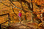 Autumn in Kellerwald forest: A female hiker walking through the golden autumn foliage in Kellerwald-Edersee National Park, Kahle Haardt Route, Hesse, Germany, Europe