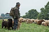 A shepherd and two dogs watching over a flock of sheep in Lengeltal valley in Kellerwald-Edersee National Park, Frankenau, Hesse, Germany, Europe