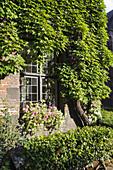 Window and grape vine, Jardin du Mayeur, guild hall, Grand Place, Mons, Hennegau, Wallonie, Belgium, Europe
