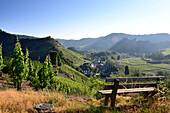 Landschaft bei Mayschoß im Ahrtal, Eifel, Rheinland-Pfalz, Deutschland