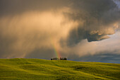 Cypresses under a stormy sky, with rainbow, Tuscany