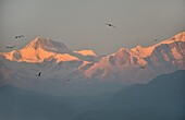 View of the Annapurna group at sunset, from the town of Pokhara, Nepal.