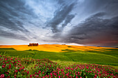 Flowers and meadows in a typical tuscanian's landscape, under a stormy sky, Orcia valley, Tuscany