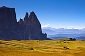 The pastures of Alpe di Siusi and the profiles of Sciliar massif in summertime , Dolomites.