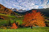 The little village of Saint Madeleine, in Funes valley during the autumn season. In the background the Odle group., Puez-Odle natural park, Trentino Alto- Adige, Italy.