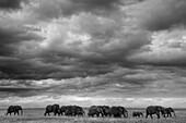 The big family of elephants, kenya
