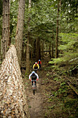 Three mountain bikers dressed in colorful clothing riding the Discovery Trail outside of Port Angeles, Washington.