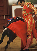 Matador Enriqué Delgado's dressed in a red Traje de luces or suit of lights, guides his charging bull just inches from his body, this act shows the skill and bravery required to fight bulls at a bloodless bullfight in the Santa Maria Bullring in Texas.
