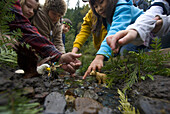 October 12, 2008 The Salmon Festival in Oxbow Regional Park celebrates the annual return of the fall Chinook salmon to the Sandy River. Children learning about the life cycles of salmon with miniature animals and people in a miniature river which is used