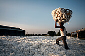 Cotton worker carrying a basket full of cotton.