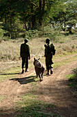 Two guards on a conservation ranch in northern Kenya at the base of Mount Kenya, watch over an orphaned white rhino who lost its parents to poachers.