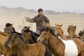 A Gobi horseman works a herd of domestic horses in Gobi Gurvansaikhan National Park, Mongolia. Mongolians are reknowned horsemen, and horses remain the most important animal for Mongolians.  releasecode: tw_mn0029