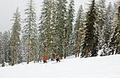 A pair of telemark skiers an April snow storm in California's Sierra mountains.