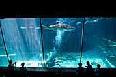 Visitors watch a scuba excursion in the shark tank at  the Two Oceans Aquarium located in the Victoria and Alfred Waterfront in Cape Town, South Africa. Photo by Jonathan Kingston/Aurora