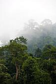 KUALA TAHAN, MALAYSIA - JUNE 29, 2007: Morning mist in the canopy of Taman Negara rainforest. photo by Ian Shive/Aurora