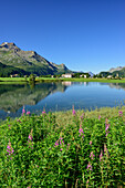 View over Inn river to Sils-Baselgia with Piz la Margna and Bergell range in background, Sils, Upper Engadin, Engadin, Canton of Graubuenden, Switzerland