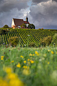Maria im Weingarten pilgrimage church seen through a wildflower meadow, Volkach, Franconia, Bavaria, Germany