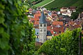 Blick auf Kirchturm von Randersacker durch Weinreben am Weinberg Marsberg, Randersacker, nahe Würzburg, Franken, Bayern, Deutschland