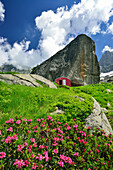 Alpine roses with red bivouac background, Lombardy, Italy
