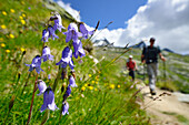 Meadow with flowers with hiker in background, Gran Paradiso, Gran Paradiso Nationalpark, Graian Alps range, valley of Aosta, Aosta, Italy
