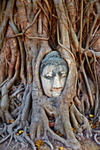 Stone Buddha head entwined in the roots of a fig tree, Wat Mahatat, Ayutthaya Historical Park, UNESCO World Heritage Site, Ayutthaya, Thailand, Southeast Asia, Asia