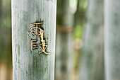 Chinese characters carved into bamboo, close-up
