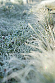 Frost-covered vegetation