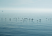 Birds flying close to surface of water